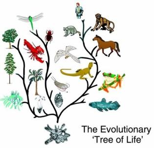 Evol tree