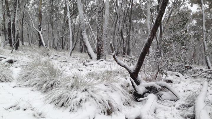 Snow in Australia might become a more common sight with a mini-Ice Age coming in 15 years. Credit: www.9news.com