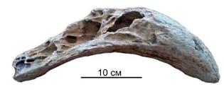 Horn stem